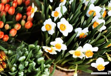 Grace-Anne-Vergara-Spring-WEB-H01