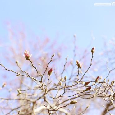 Budding 01 | © 2014 Grace Anne Vergara