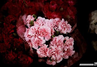 Dark Flowers | © 2014 Grace Anne Vergara