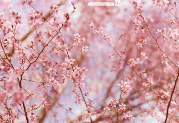Pretty In Pink | © 2014 Grace Anne Vergara