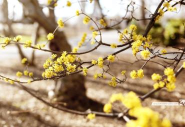 Spring In Yellow | © 2014 Grace Anne Vergara