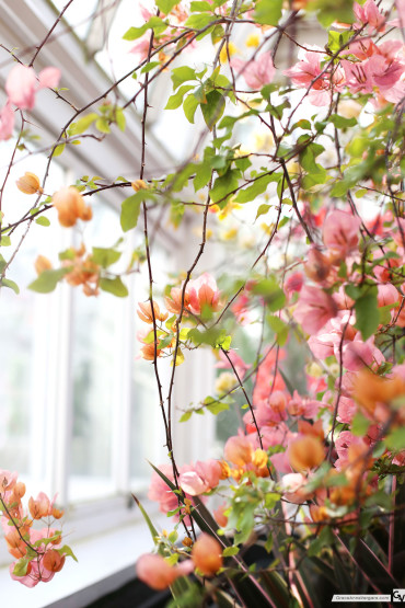 Spring Pink | © 2015 Grace Anne Vergara